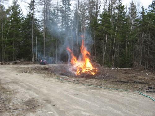 burning brush