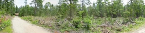 timber panorama