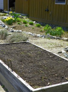spinach, lettuce, and snowpeas