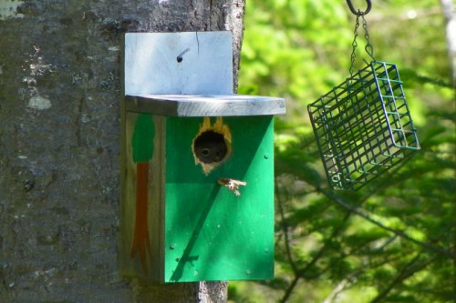 Squirrel in Bird House