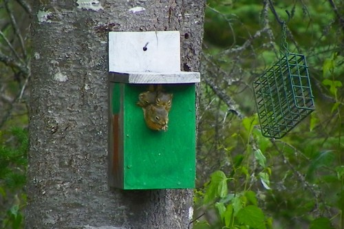 three squirrels in a birdhouse