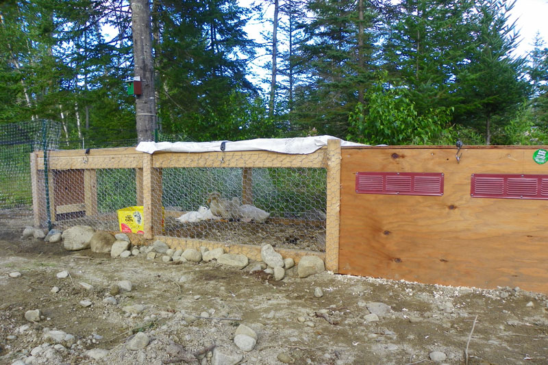 The ducks have new digs downeast thunder farm for Winter duck house