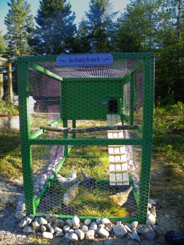 bantam chickens in chicken tractor