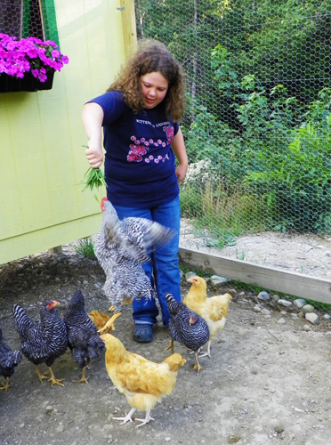 hand feeding chickens