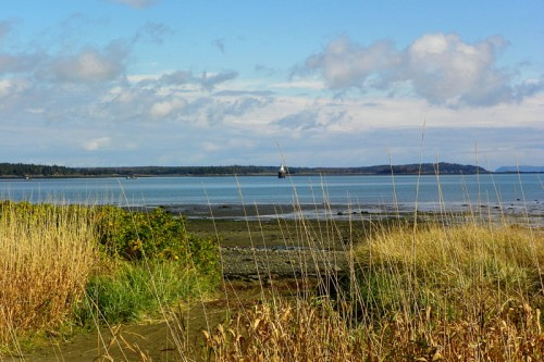 View from South Lubec Road