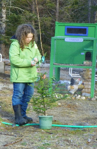 Hannah decorating a tree for the chickens and ducks