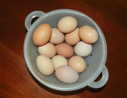 A Dozen Egg Day