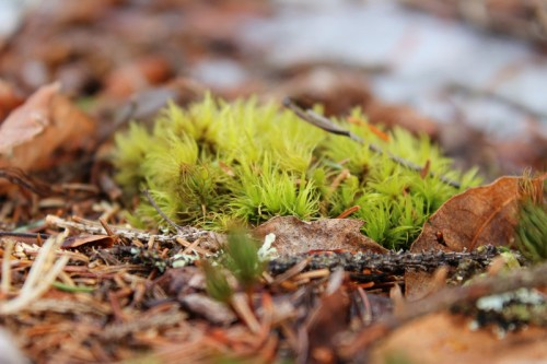 moss in winter
